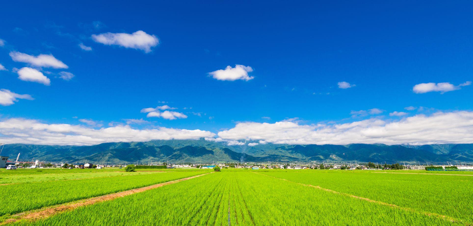Comment Vendre Un Terrain Agricole A Un Promoteur Nexity